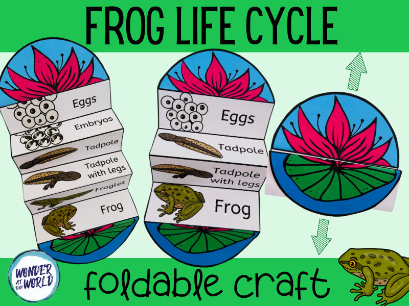 Life cycle of a frog foldable craft