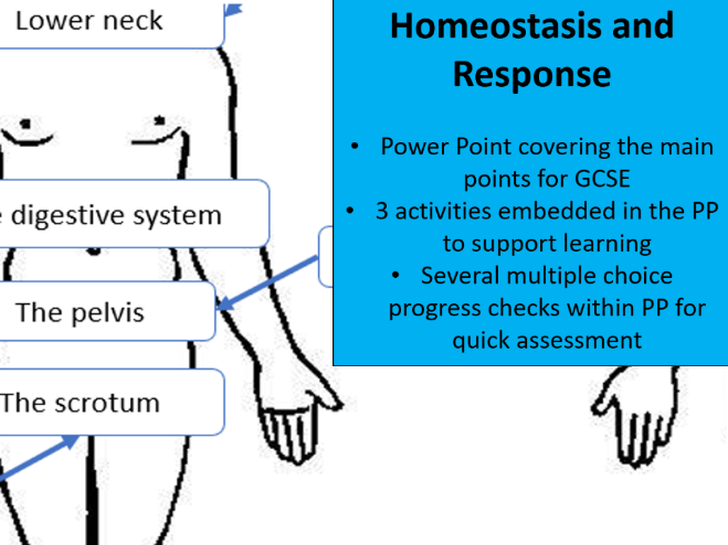 Homeostasis and Response -  Skeleton PP for AQA Combined Science (Biology topic 5)