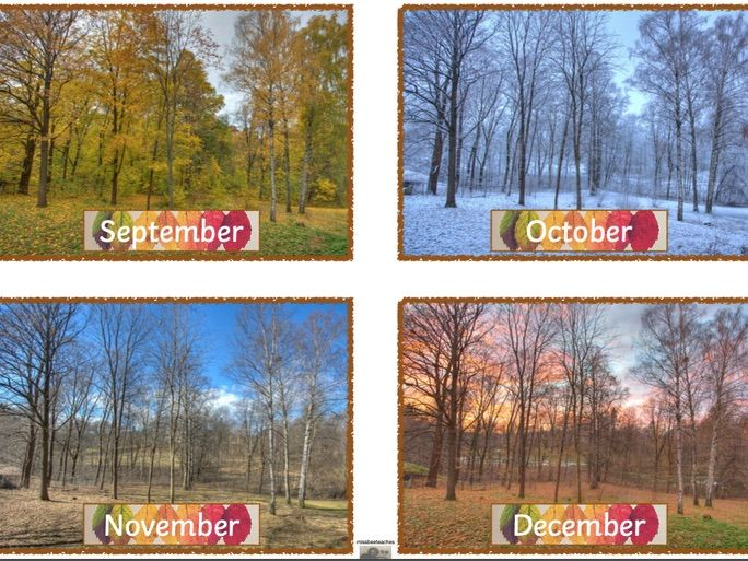 Seasons Birthday Display / Calendar- natural tree theme