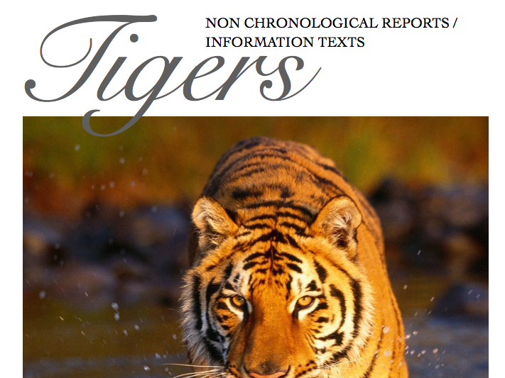 Non-Chronological Reports / Information writing on Tigers - Boys Writing - May 2018 Update!
