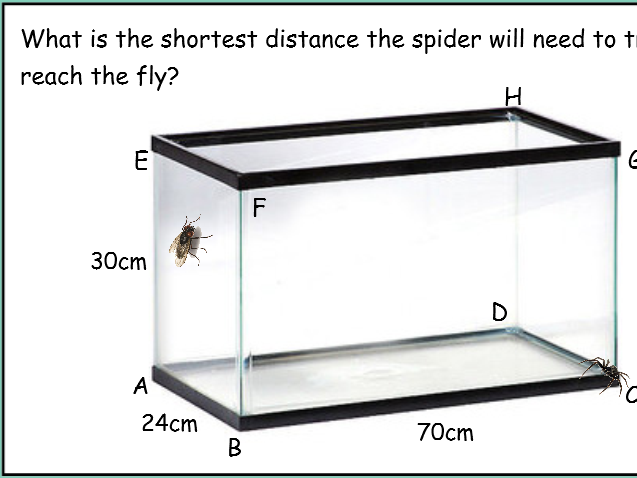The fly vs the spider