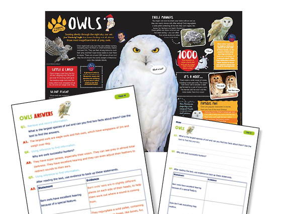 Year 4 owls Reading comprehension