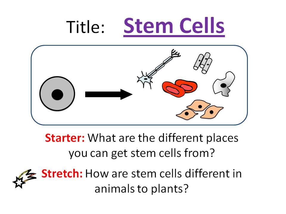 Stem Cells - OCR AS/A Level Biology