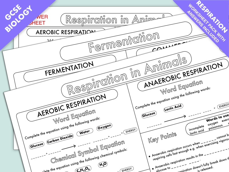 GCSE Biology: Respiration Worksheet Pack UPDATED