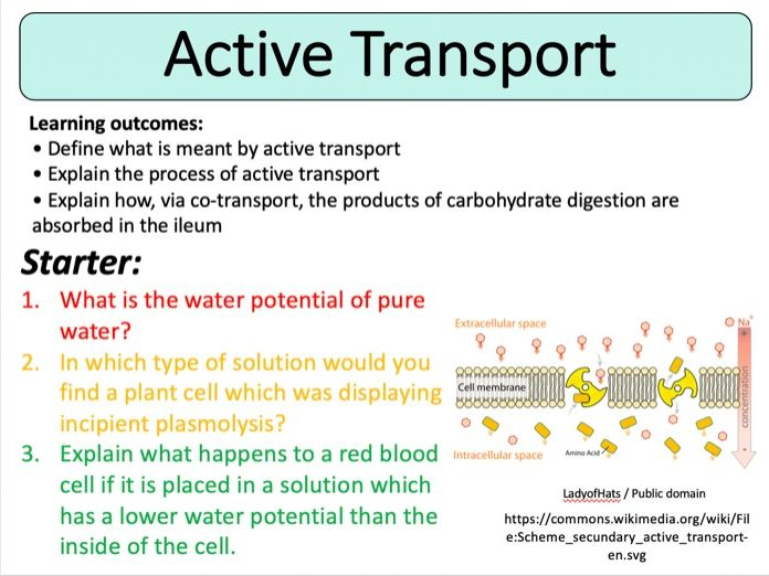 NEW (2016) AQA AS-Level Biology – Active Transport