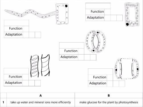 B1.5 Specialisation of plant cells: GCSE AQA Unit B1 Cell structure and transport
