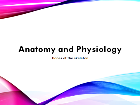 Level 2 Sport: Unit 7 Anatomy (Full unit with PowerPoint, worksheets & Unit Plan)