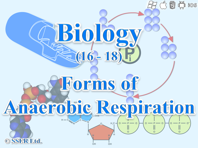 3.5.2 Respiration 2 - Forms of Anaerobic Respiration