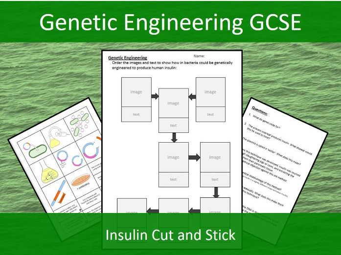 GCSE Genetic Engineering insulin Cut and Stick activity and Answers