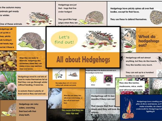Hedgehog PowerPoint for KS1 and Y3