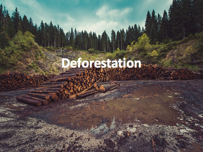 Deforestation | Teachi...