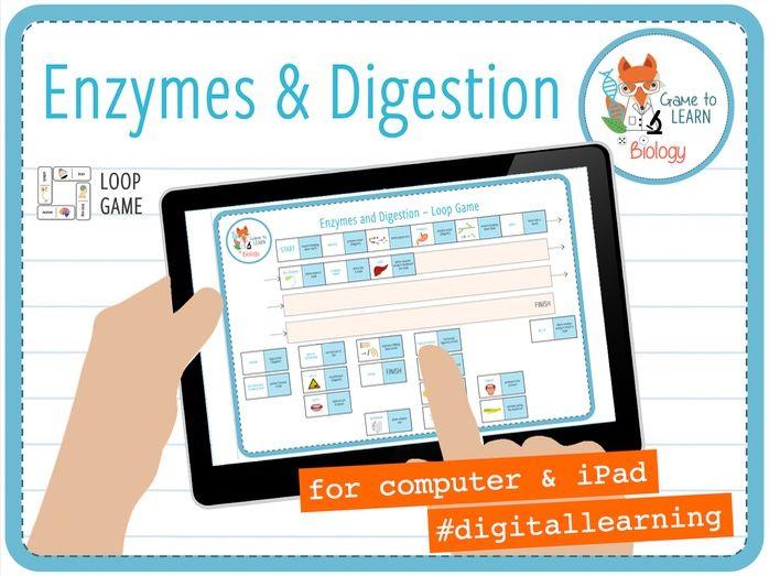 Enzymes and digestion - Digital Loop Game (KS3/4)