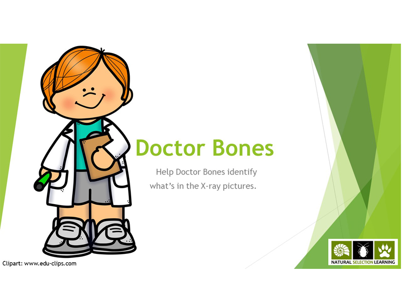 Dr Bones Identify the X-ray PowerPoint Presentation (KS2, Skeletons)