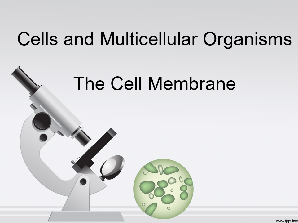 Cell Membrane Structure PowerPoint