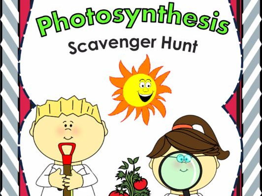 Photosynthesis Scavenger Hunt - An Activity