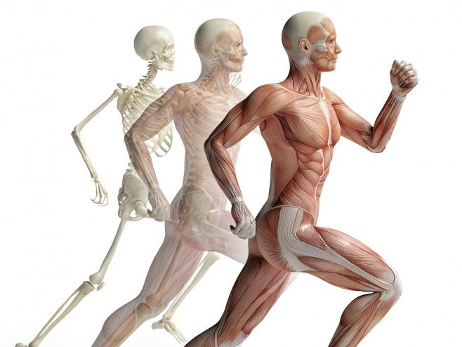 BTEC Applied Science 2016 Unit 8 Aim A, Musculoskeletal System -Physiology of Human Body Systems,