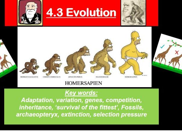 Classification and evolution resources for OCR A-level biology- new specification!
