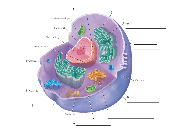 Parts of the Animal Cell - Organelles - Biology Station Activity