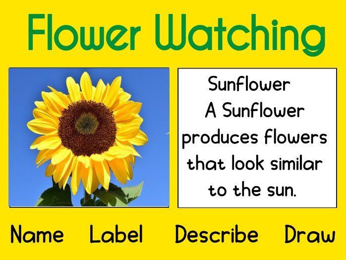 Flower Watching