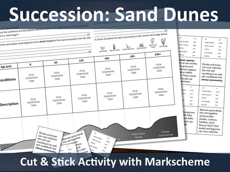 Succession: Sand Dunes cut and stick (A level resource)