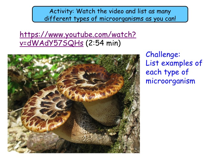 5.3 and 5.4 Growing bacteria in the lab &  preventing bacterial growth GCSE (Grade 1-9) Biology