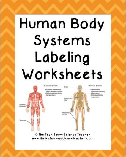 Human Body System Labeling Worksheets By Thetechsavvyscienceteacher