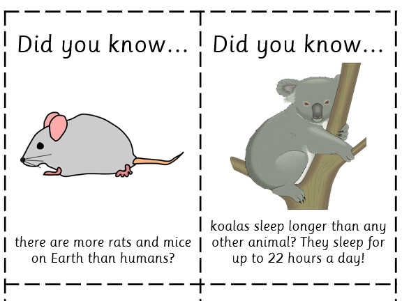 Fun Fact Cards: Mammals