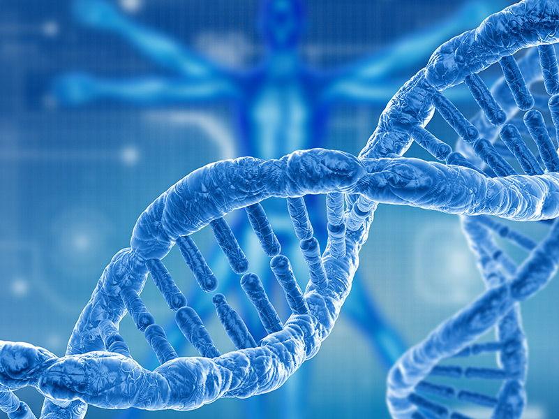 A Level Biology Genetics - Gene expression