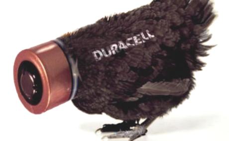 Battery Hens. Writing a persuasive (yet balanced) speech on animal welfare.