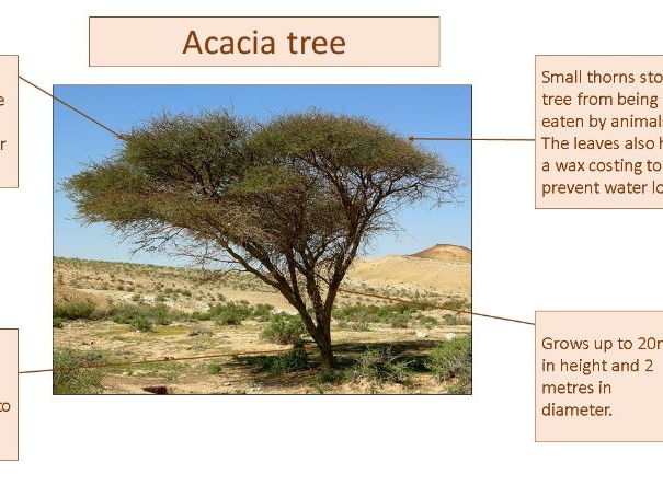 Hot semi-arid grasslands ecosystems, nutrient cycles, food chains, biodiversity- Eduqas AQA/