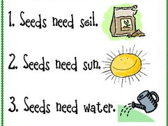 Primary - KS1 - Science - How to Plant a Seed