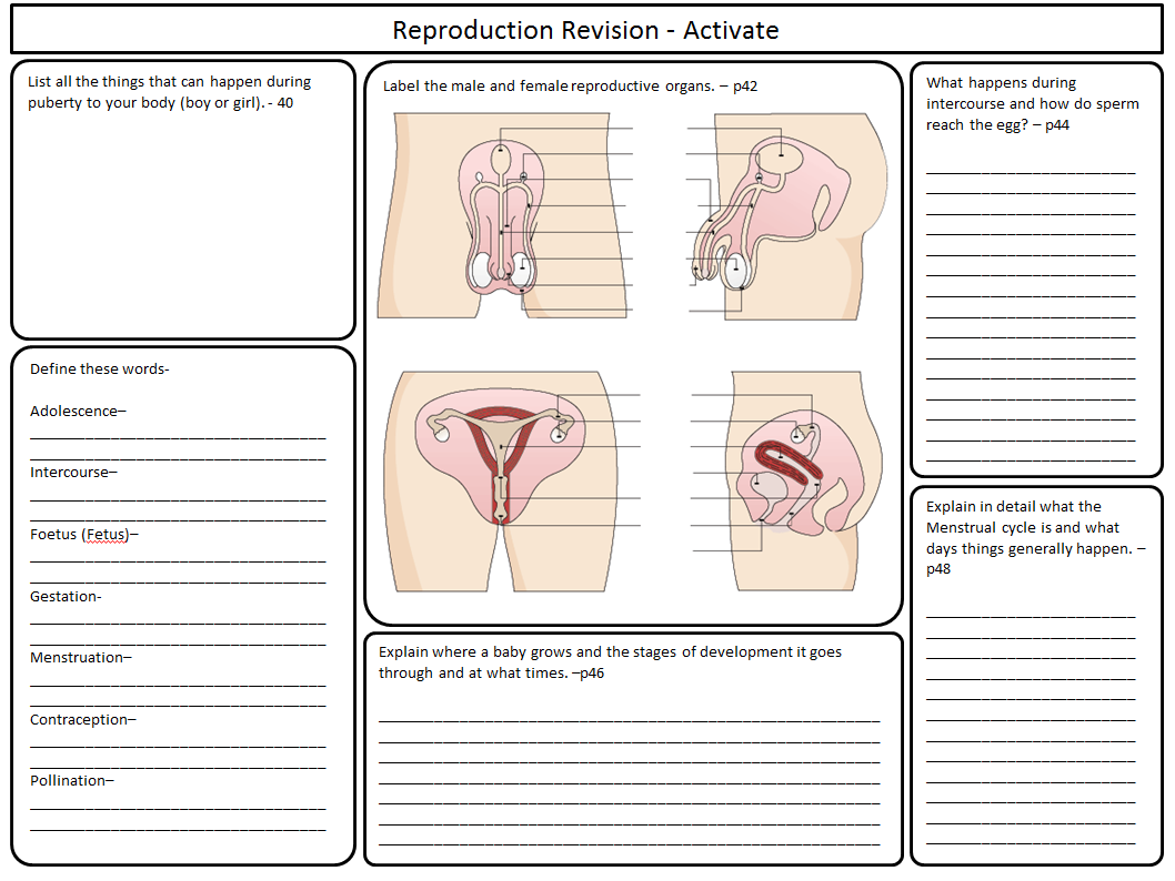 KS3 Year 7 Activate Science Revision sheets