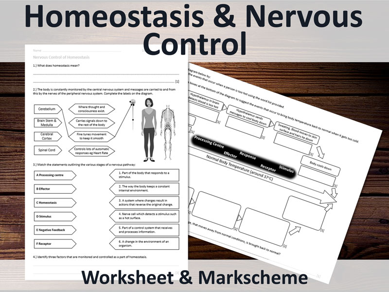 Nervous Control, Homeostasis & Negative Feedback. Worksheet for GCSE (14 to 16).