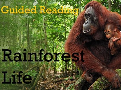 Guided Reading: UKS2 - Rainforest Life