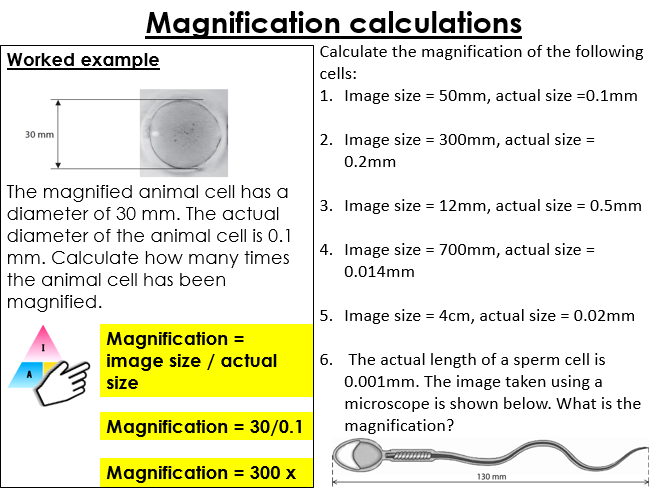 Cells (plant and animal cells) and magnification