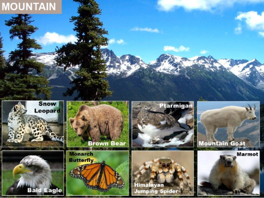 Animals and their Habitats Key Stage 1