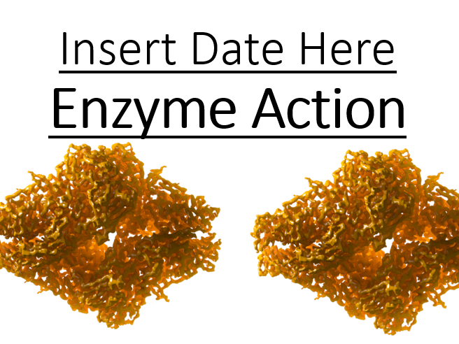 CB1f - Enzyme Action