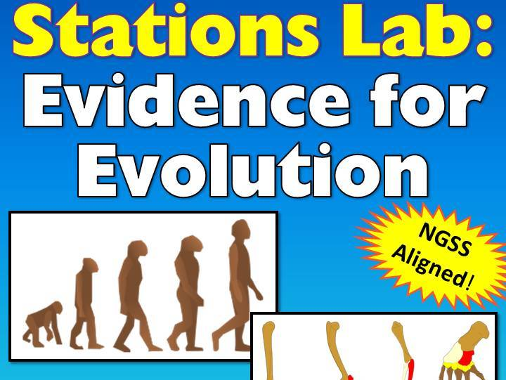 Evidence For Evolution Lab: Students Examine Various Lines of Evidence at Stations