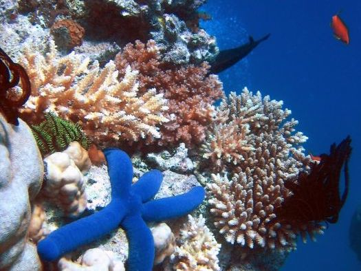 Great Barrier Reef (Ecosystems) KS3 PowerPoints and Worksheets