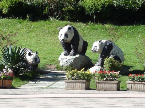 THE PANDAS OF CHENGDU CHINA - WHEN NOT ALL PANDAS ARE BEARS