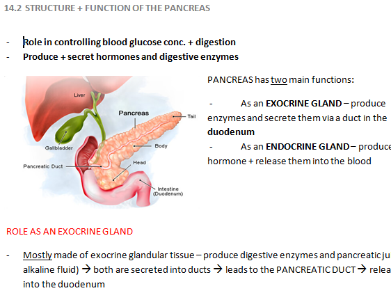 Structure & Function of the Pancreas [REVISION NOTES]