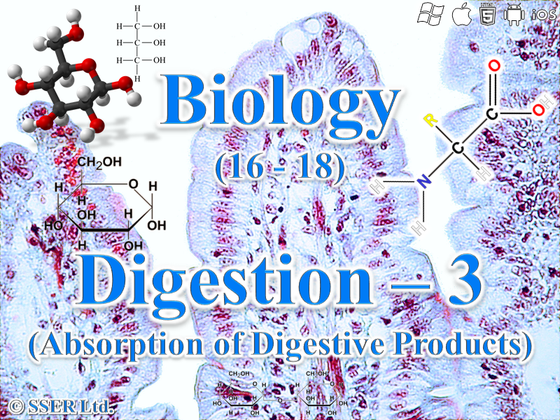 3.3.3 Digestion 3a - Absorption of Digestive Products