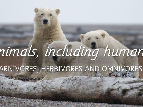 Carnivores, Herbivores and Omnivores Lesson