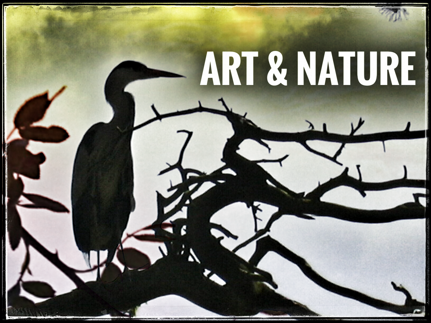 ART and Nature. Art Resources.