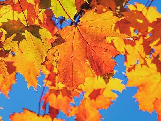 Autumn Leaf Colours - Picture Poem Sheet