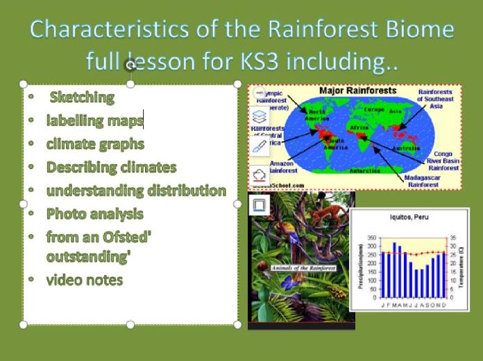 characteristics of the rainforest biome