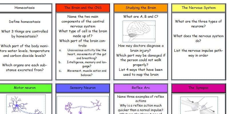 New (2016) AQA GCSE Biology Revision Cards: Homeostasis and Response Topic