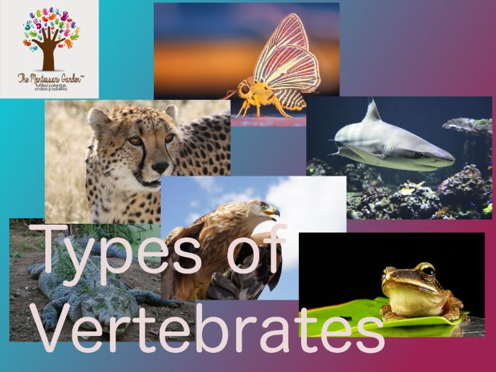 Montessori Classification: Types of Vertebrates