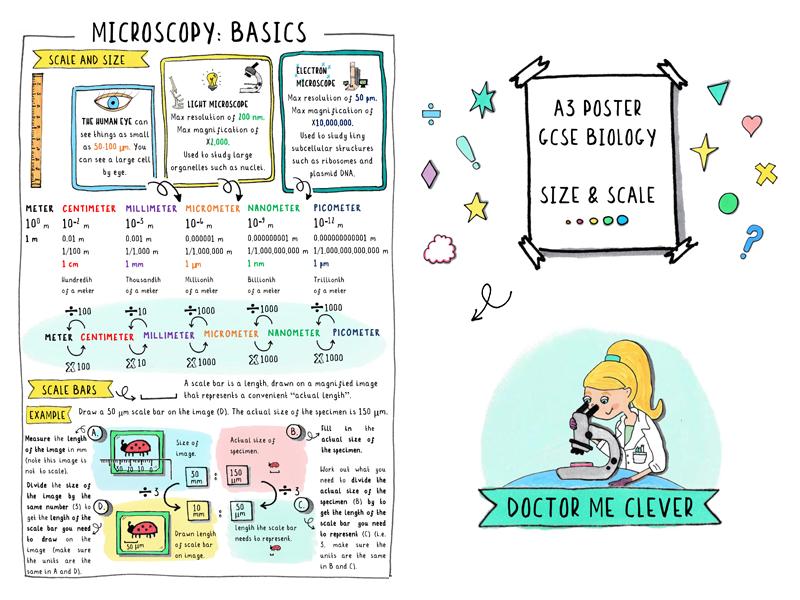 A3 Poster - Microscopy Basics: Scale and Size - GCSE Biology