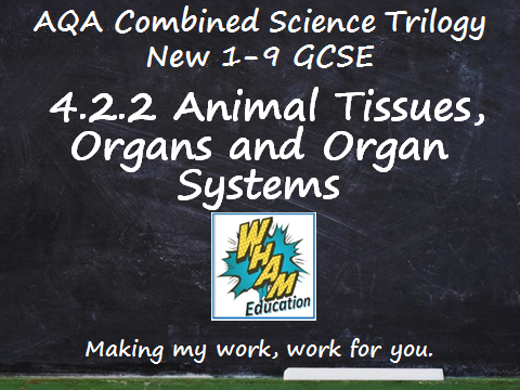 AQA Combined Science Trilogy: 4.2.2 Animal Tissues, Organs and Organ Systems